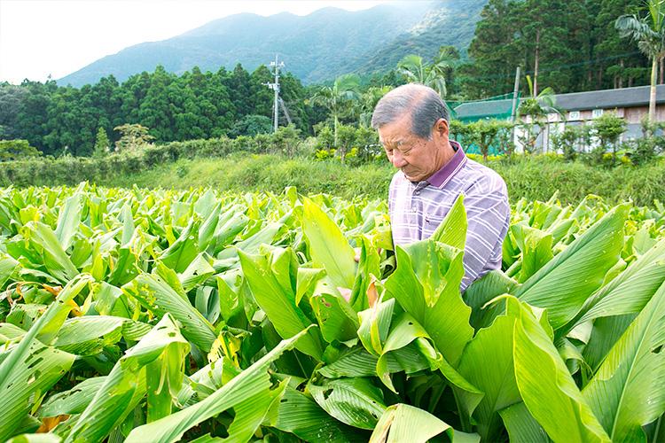 連作はご法度。滋養たっぷりの畑から採れるウコン