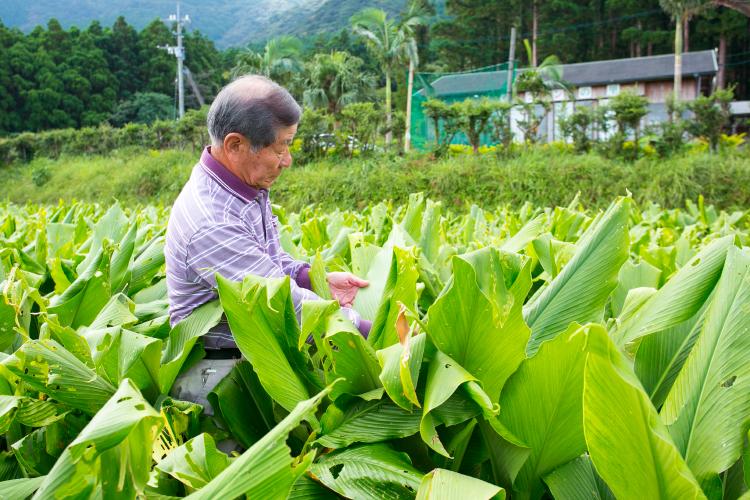 土の状況、その年の天候傾向を見極めながら、安定した品質のウコンを作り続けます。