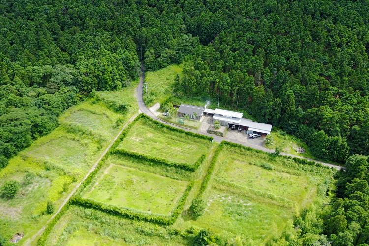 ドローンで撮影したウコン畑の様子です。ウコン畑は屋久島だけでも3haほどあります。