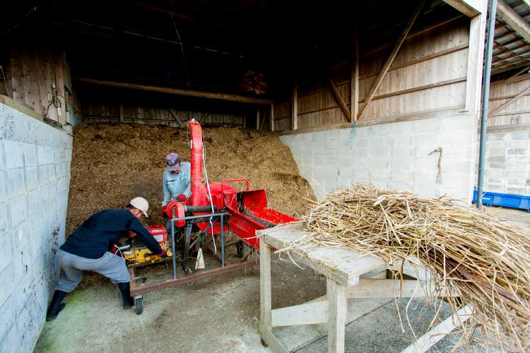 品質の良いウコンには栄養たっぷりの土作りの過程が欠かせません。