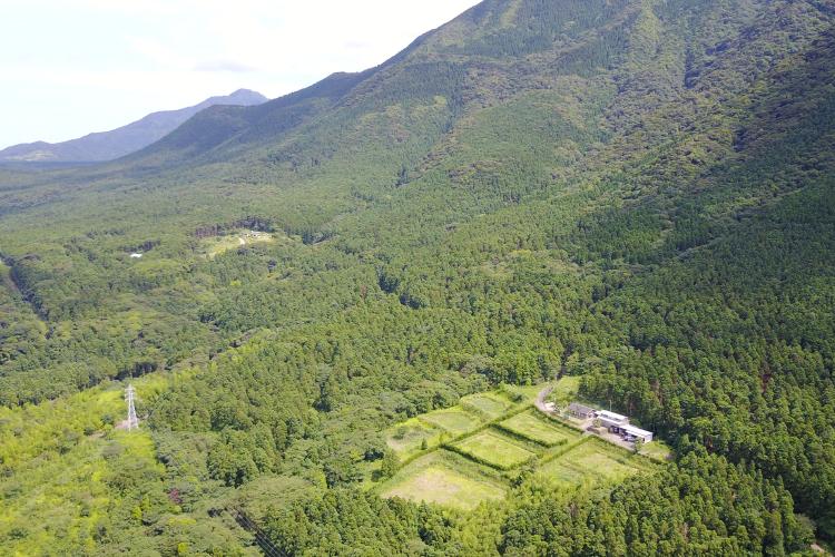 屋久島ウコンの里の畑は広大な自然に囲まれた場所にあります。