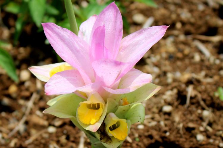 芽が出て〜花が咲く