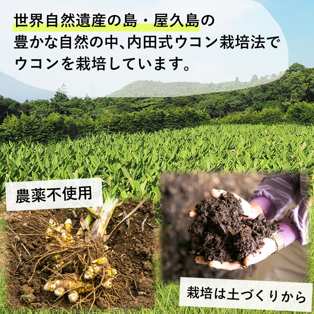 世界自然遺産の島・屋久島の豊かな自然の中、内田式ウコン栽培法でウコンを栽培しています。 農薬不使用・栽培は土づくりから
